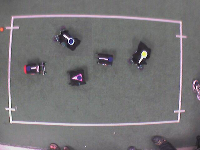 Bird's